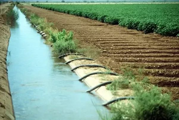 Effects of Canal Irrigation