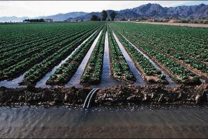 Surface Irrigation Methods