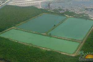 WasteWater Treatment Ponds